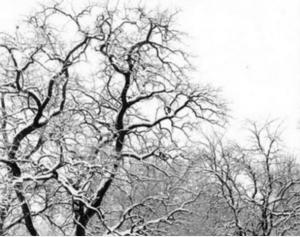 feb2010pic